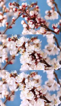 4K鲜花盛开实拍视频素材