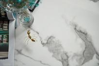有蚂蚁摆件的台面