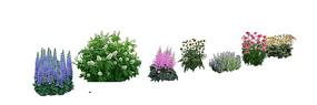 花卉植物集合