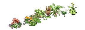 写意花卉植物素材