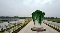 公园巨星大白菜实拍视频