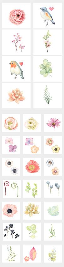 手绘精美花鸟植物插图