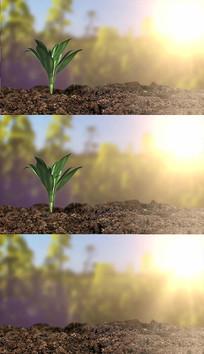 植物发芽生长背景视频