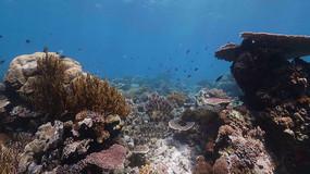 4K海底世界珊瑚礁实拍视频