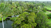 夏威夷香山植物园4k实拍视频