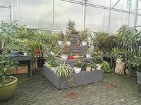 阶梯展台多样植物展示景观