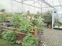 温室观赏性绿化植物景观组合
