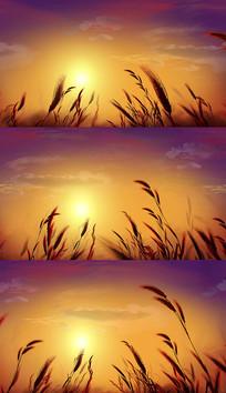 4K夕阳小草背景视频素材