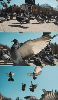广场喂鸽子实拍视频素材