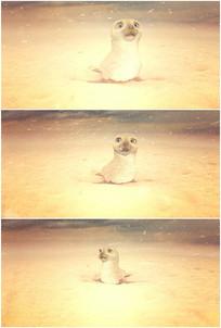海狮海象可怜表情害怕视频