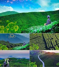 民歌茶山情歌舞台背景视频
