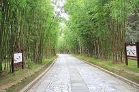 山间竹林景观鸟类标识导视