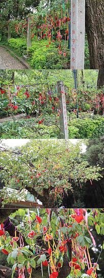 心形许愿挂件彩带植物景观装饰