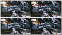 雪季背景视频