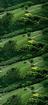 唯美绿色梯田山村风光实拍视频素材
