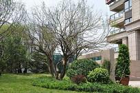 乔木灌木组合景观