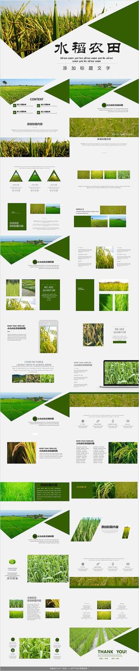 农田耕种水稻农田PPT模板