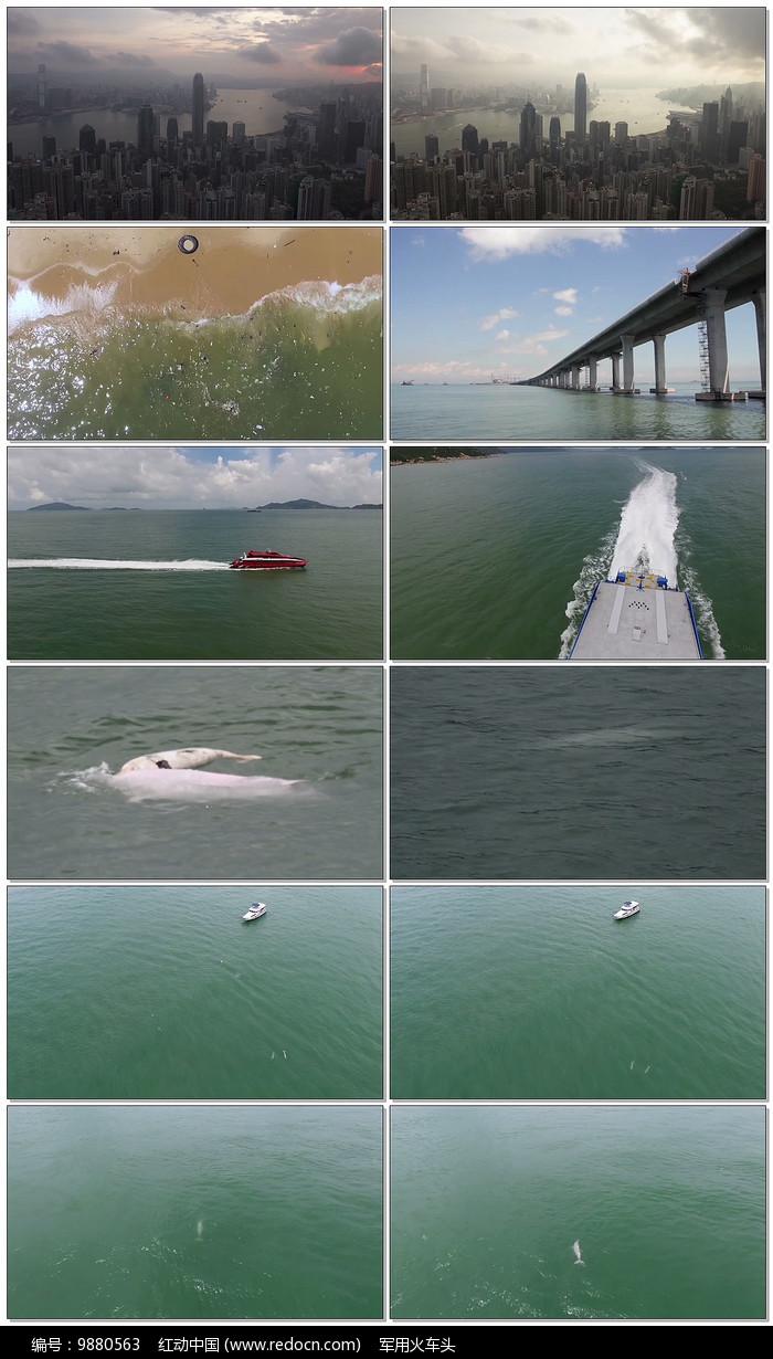 中华白海豚视频图片