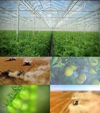 农业科技丰收蔬菜大棚畜牧养殖