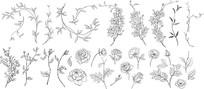 素描花朵花纹花边