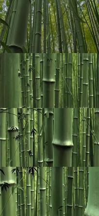 竹林竹叶竹子实拍视频素材