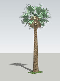 广场棕榈植物SU