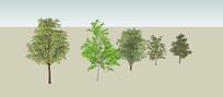 3D常用树SU模型
