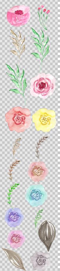唯美花朵植物手绘 PNG