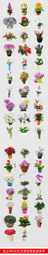 鲜花店铺绿植盆景盆栽花卉素材