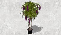 垂钓植物盆栽