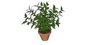 绿色植物盆栽SU模型