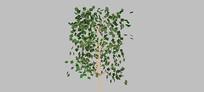 树叶图片几何树组件SU模型