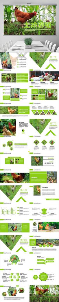 原生态农家土鸡养殖PPT模板