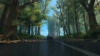 森林公路汽车