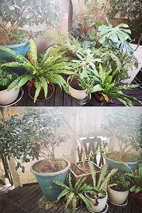 装饰盆栽绿色植物景观