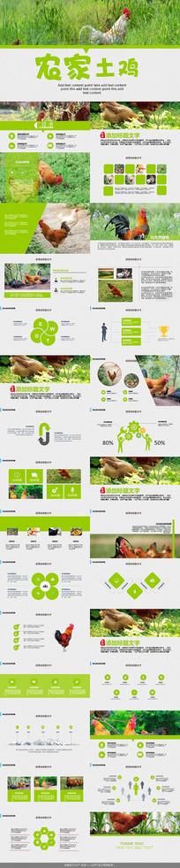绿色生态农家土鸡PPT模板