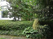 百草园公园植物景观