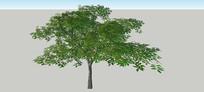 大树造型SU模型