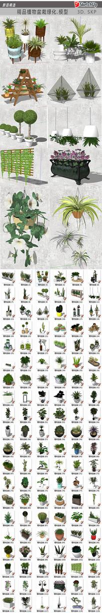 精品植物盆栽绿化
