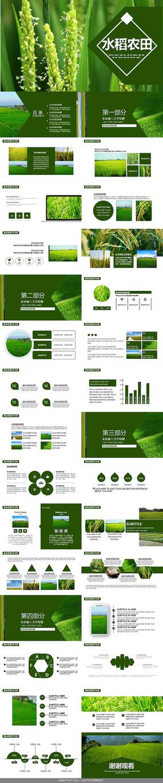 农产品水稻农田PPT模板