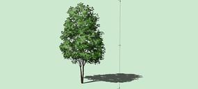 手绘树木SU模型