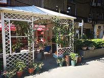 小清新花房盆栽绿化景观