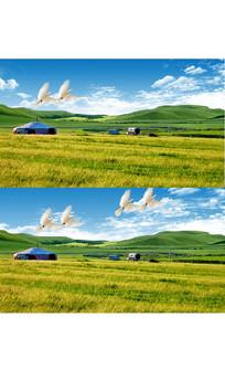 蓝天白云风吹草原白鸽飞翔视频