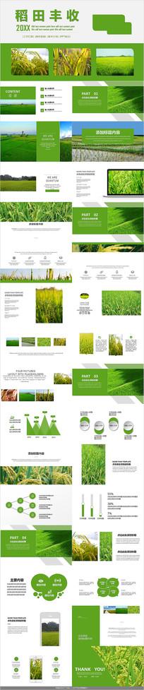 农田规划水稻PPT模板