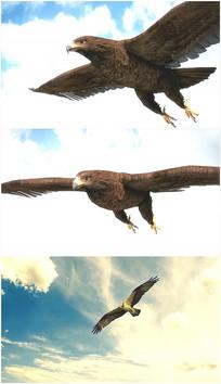 老鹰大鹏展翅空中翱翔视频