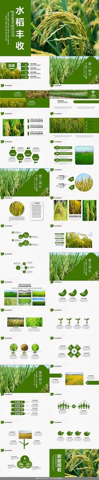 绿田水稻丰收PPT模板 pptx