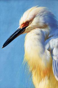 超清长嘴鸟装饰画