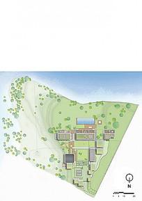 景观绿化植物彩色平面图