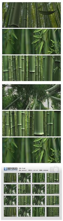 紫竹林竹叶青绿色森林视频素材