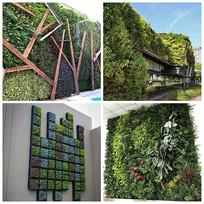 垂直绿化与植物墙